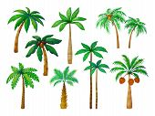 Cartoon Palm Tree. Jungle Palm Trees With Green Leaves, Coconut Beach Palms Isolated Vector Set poster