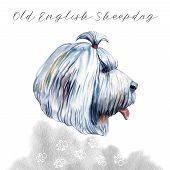 Old English Sheepdog Used To Watch Livestock At Farms Isolated Digital Art Illustration. England Ori poster