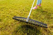 Raking Leaves Using Rake. Person Taking Care Of Garden House Yard Grass. Agricultural, Gardening Equ poster