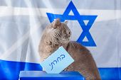 Cute Cat And Vote Box On Election Day Over Israel Flag Background. Hebrew Text I Voted On Voting Pap poster