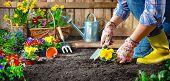 Gardener planting flowers in sunny garden poster