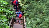 Blur Image Of Travelers Traveling On Footpath, Ecotourism In Beautiful Nature Environment In Trail O poster