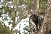 Tabby Cat Catch On Tree, Cute Cat, Gray Tabby Cat, Cute Tabby Pussycat, Gray Pussycat, Adult Pussyca poster