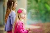 Cute Little Girl Watching Animals At The Zoo On Warm And Sunny Summer Day. Child Watching Zoo Animal poster