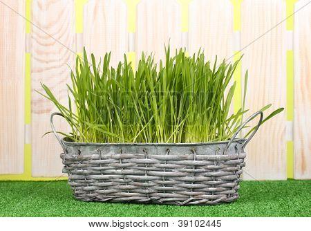 Green grass in basket near fence