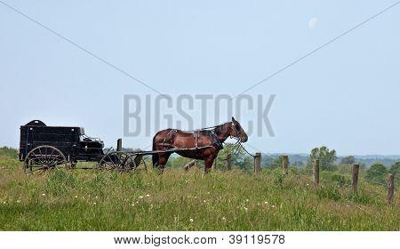 Buggy e a cavalo Amish