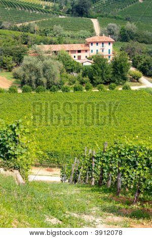 Langhe Vineyards And Villa
