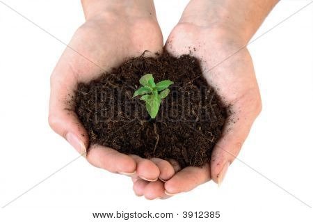 Soil And Weeds In Hand