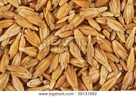 Dried spelt