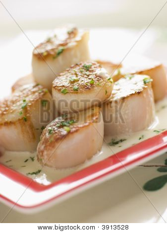 Seared Scallops With Cava Cream And Herb Sauce