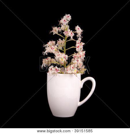 Horse Chestnut Flower In A Vase On A Black Background