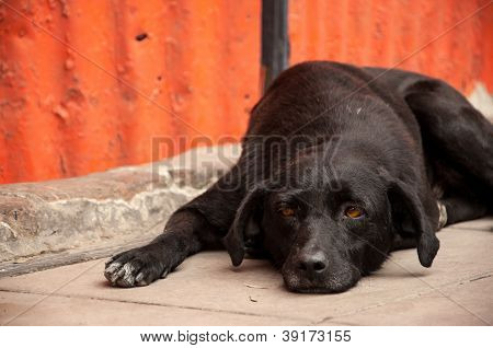Dog Laying on Sidewalk Thinking