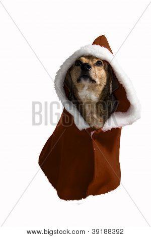 Priest Dog