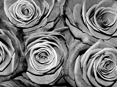 foto of transpiration  - Black and white roses monochrome background texture - JPG