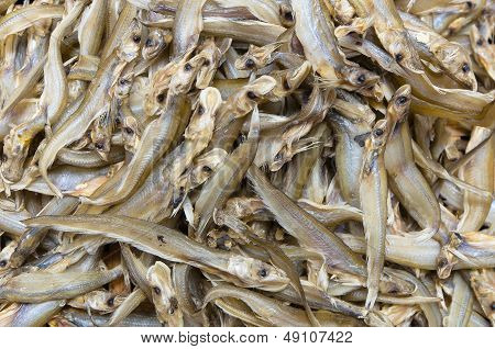 Dried  Whisker Sheatfish Use As Background