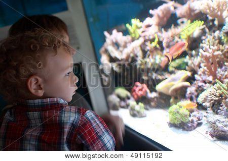Child Watching Fishes