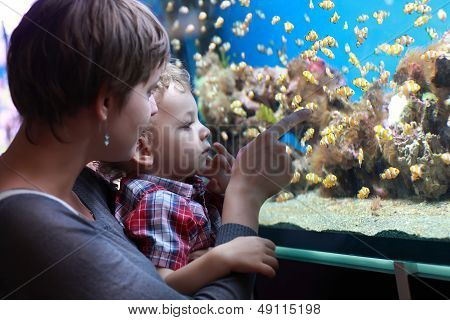 Family And Fishes