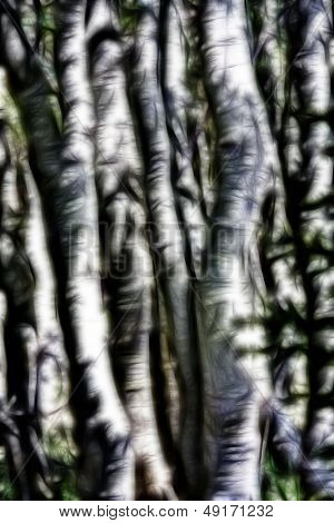 Aspens Abstract