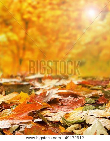 Bright autumn background made of autumn leaves and the blurred park