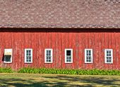 pic of red siding  - This is a horizontal photo of the broadside of a barn with white windows and faded damaged red paint - JPG