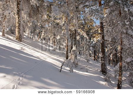 Snow in navacerrada madrid spain
