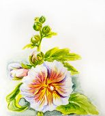 foto of hollyhock  - Hollyhock flowers - JPG