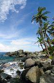 picture of encounter  - Colombia wild coast of the Caribbean sea near Capurgana resort where the Darien jungle is encountering the beach - JPG
