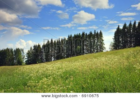 Meadow, Fur-trees, Clouds