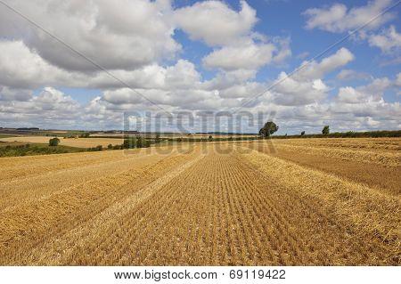 Golden Stubble Field
