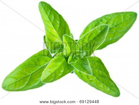 Green fresh marjoram leaves on a white background. Clipping path.