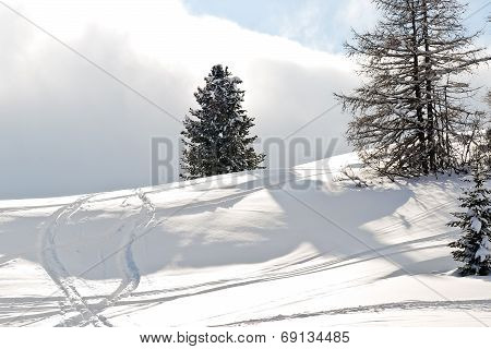Ski Run Around Fir Tree In Dolomites, Italy