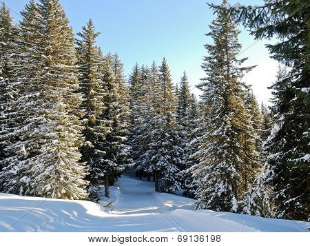 Ski Run In Snow Forest On Mountain, France