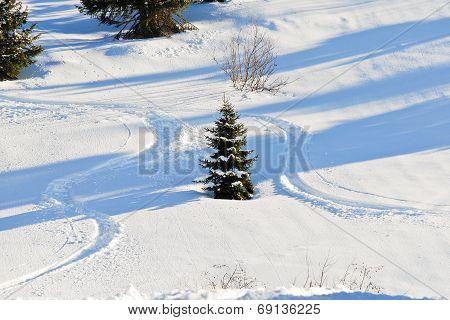 Skiing Tracks Around Fir Tree On Snow Slope