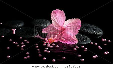 Beautiful Spa Still Life Of Pink Hibiscus, Drops And Pearl Beads On Zen Stones With Ripple Reflectio