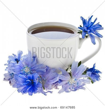 Diet drink chicory in a cup - Coffee substitutes with Cichorium intybus flower