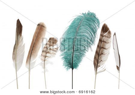 feather arrangement