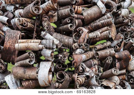 trubetskiis birch bark