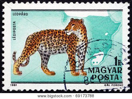 Postage Stamp Hungary 1981 Leopard, Panthera Pardus, Big Cat