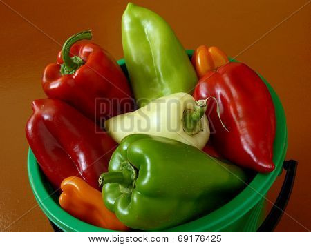 home grown sweet peppers in a bucket