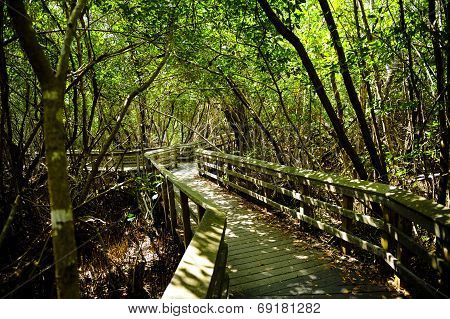 Observation Trail In The Everglades National Park