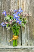 stock photo of borage  - a posy of blooming borage stands on a wooden board - JPG