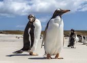picture of falklands  - December 25th 2011 