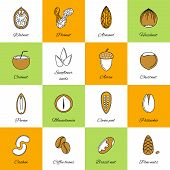 Постер, плакат: Set of nuts icons