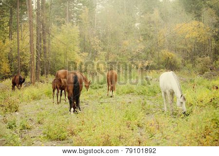 natural herd of horses