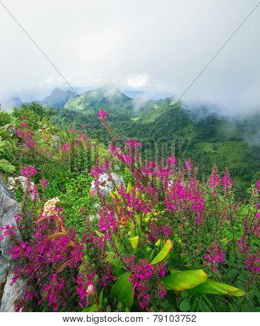 Mountain Range with wildflowers