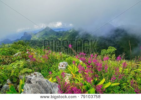 Tropical Mountain Range with wildflowers