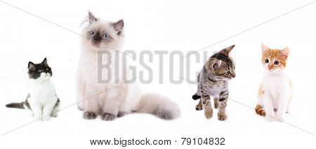 Collage of four cute kittens isolated on white