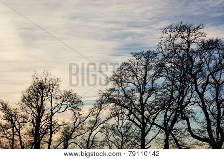Winter Treetops And Sunset