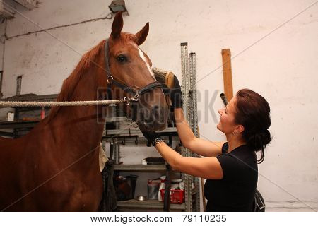 Brunette Woman Grooming Brown Horse For The Riding