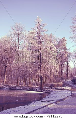 High Tree Near Lake Plastered With Snow